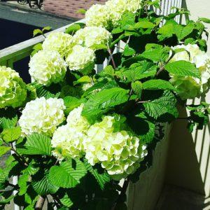 お花が咲いた‼️